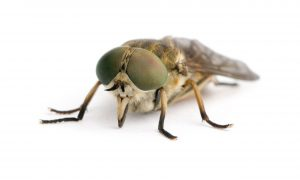 Flying Insect Control George is just another quality tailored service by Pestech.