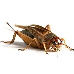 Insect Control George team of Pest Control specialists only use targeted treatments to achieve industry leasding results. A bespoke Extermination service by Pest Worx George